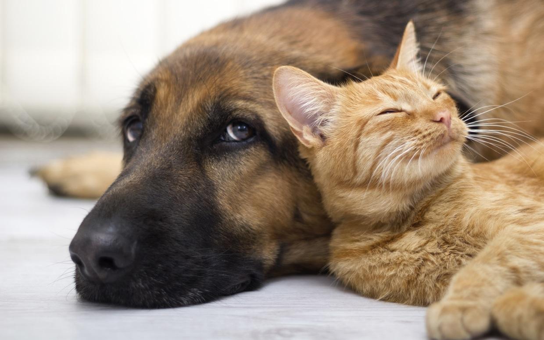 cout animal de compagnie