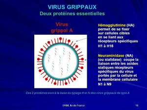 virus_grippe_aviaire