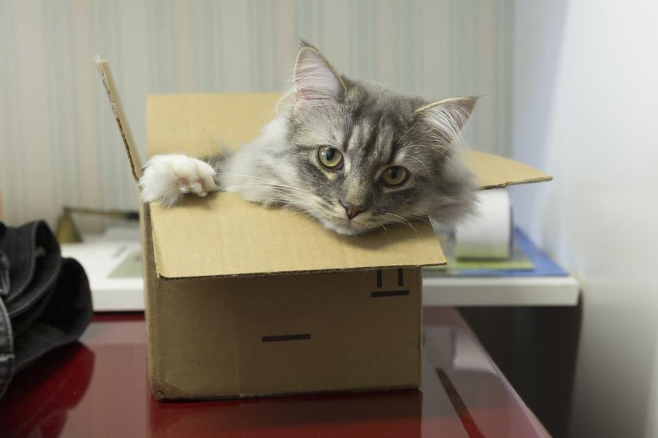 se-refugier-dans-des-cartons