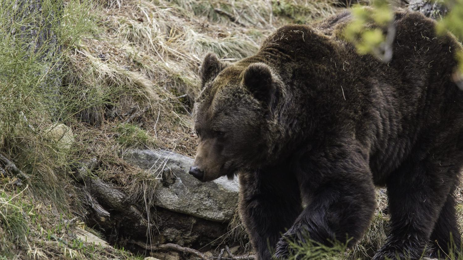 Rencontre ours
