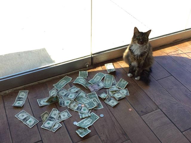 Ce chat avait toujours un tas de billets à côté de lui – ces propriétaires confus ont enfin compris grâce aux vidéos – Epoch Times 2