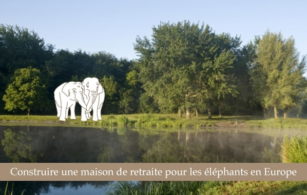 maison-retraite-elephants