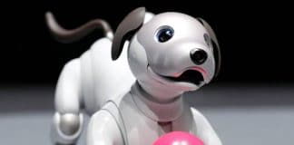 chien-robot-aibo
