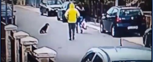 Ce voleur de sac à main aurait dû remarquer le chien qui guettait tout près... (vidéo) 1