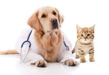 assurance-sante-animale