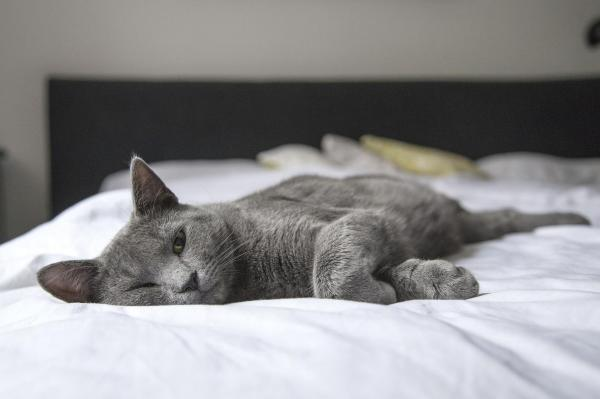 chat-qui-dort