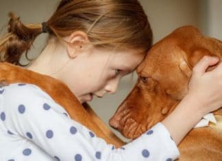 chien empathie