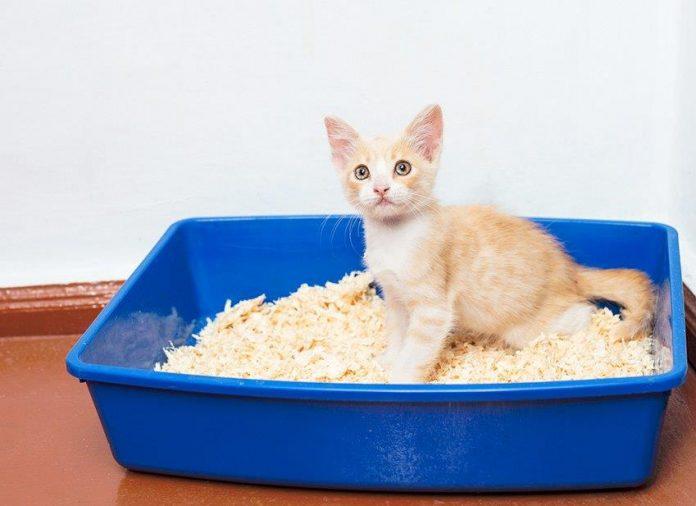 litiere-chaton