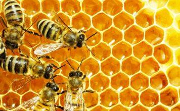 abeille-miel