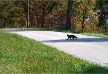 chat-traverse-route