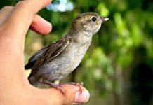 oiseau-blesse