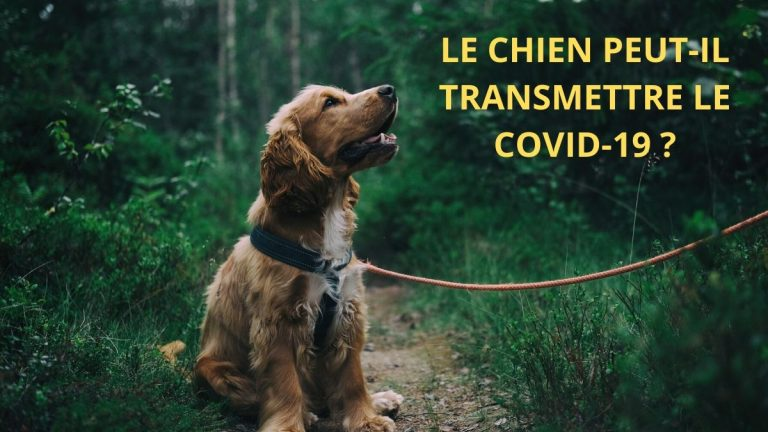 Mon chien peut-il contracter le coronavirus?