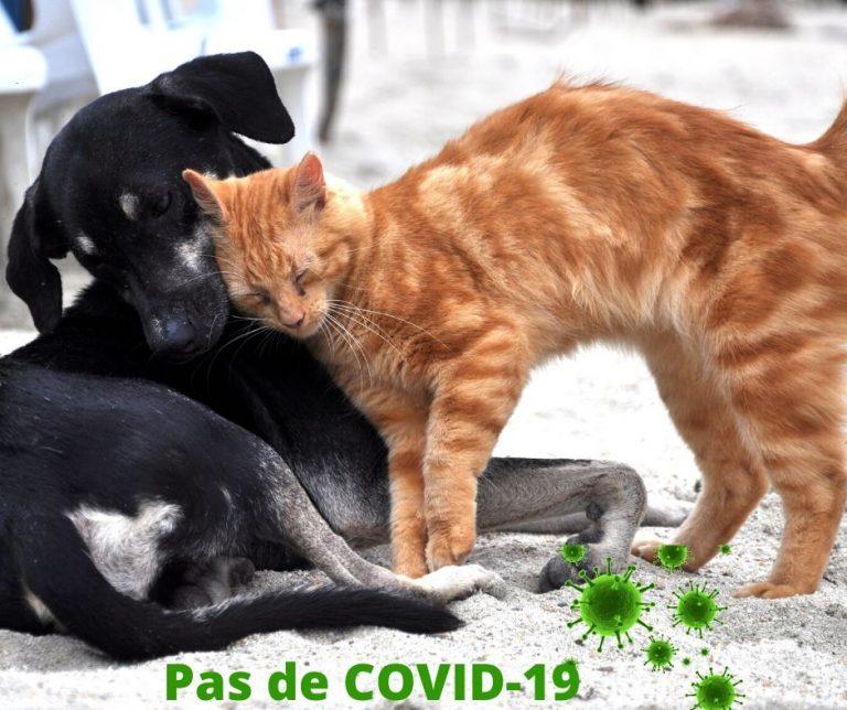 Aucun cas de COVID-19 parmi les animaux de compagnie aux USA