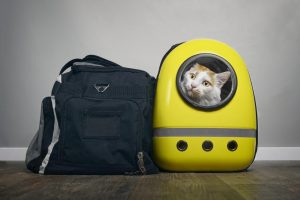 mal des transports chez le chat