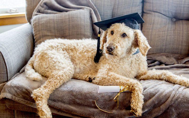 Les chiens sont ils intelligents ?